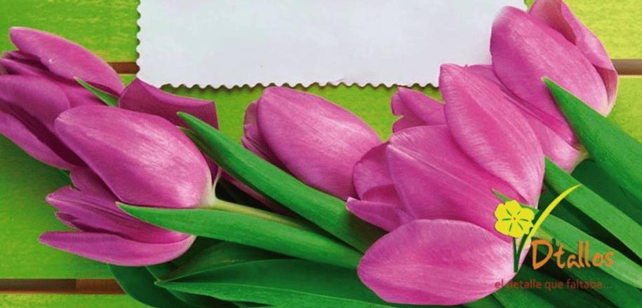 floreria-de-tallos